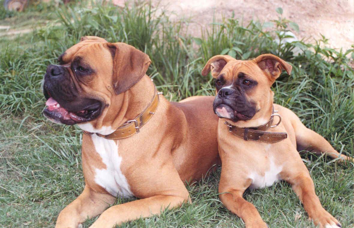 اسعار الكلاب في مصر 2020 كل الأنواع